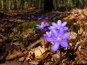 the-spring-forest-1385211